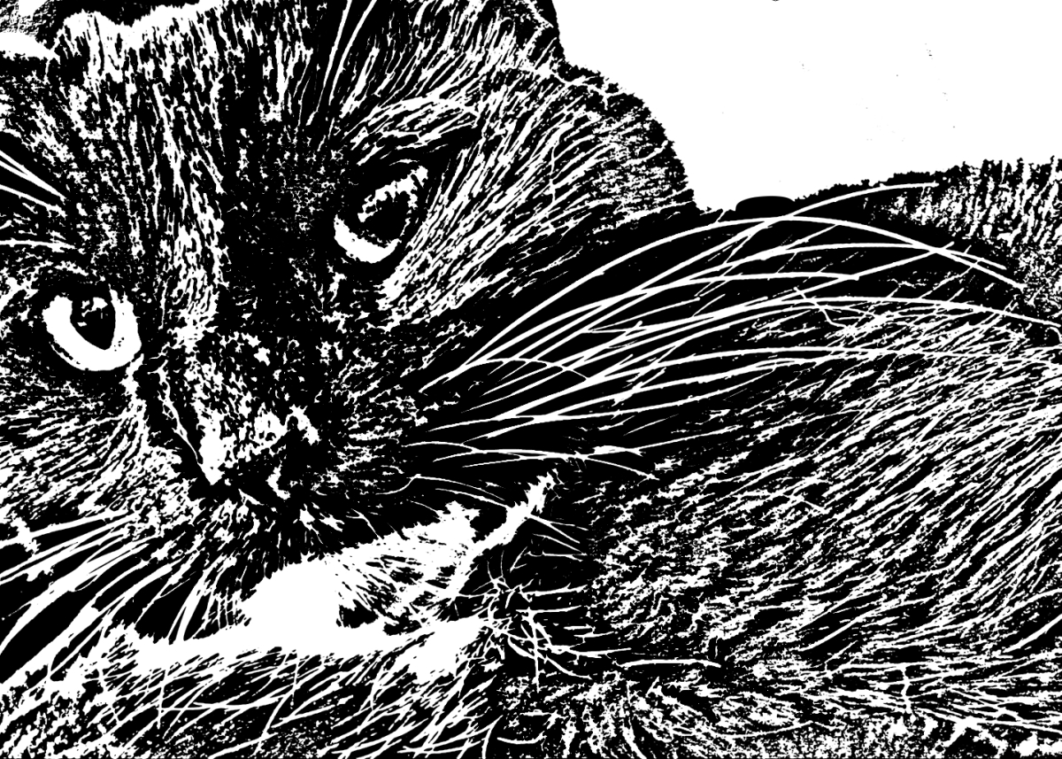 Black & white cat woodcut closeup