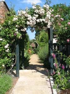 Garden with arch of roses