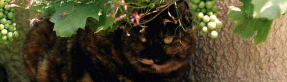 small tortoiseshell cat sitting on shelf under a grapevine